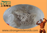 Raw White Steroids Hormone Norethisterone Top Purity  99% Progestrone With Good Price